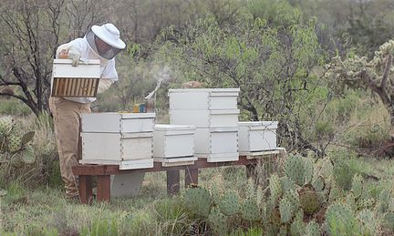 Greg tending to one of his beehives
