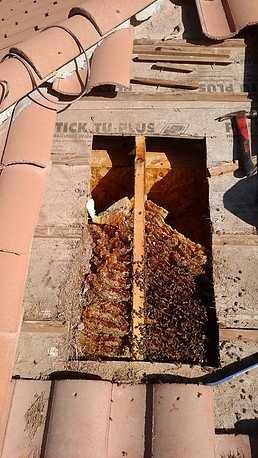 How To Get Rid Of Bees Nest In Roof Flat Pictures