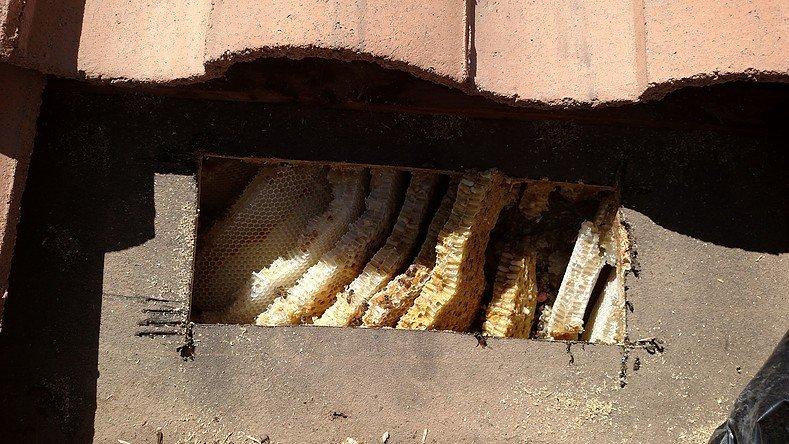 Beehive Removal & Repair slide