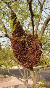 Healthy swarm