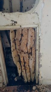 Hive in exterior wall