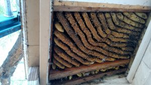 Hive in roof eave