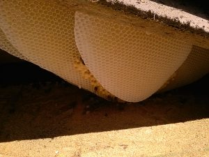 Hive in Roof
