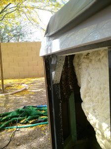 New hive in a hot tub