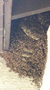 Open Hive