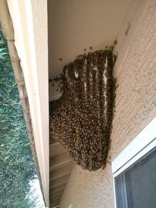 Open hive in roof eave