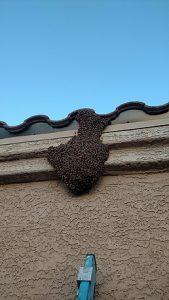 Roof Swarm