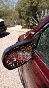 Swarm invalding a car