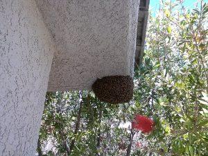 Swarm on roof