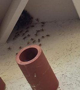 Wasp Controls