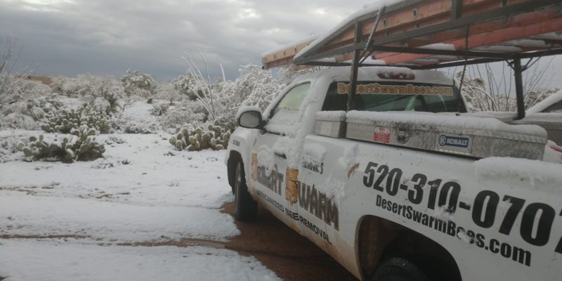 Snow in Tucson, AZ on New Years day