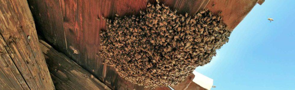 DIY-bee-removal