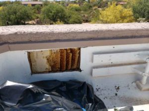 bee-removal-and-repair-tucson