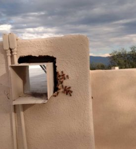 wasp-removal-tucson